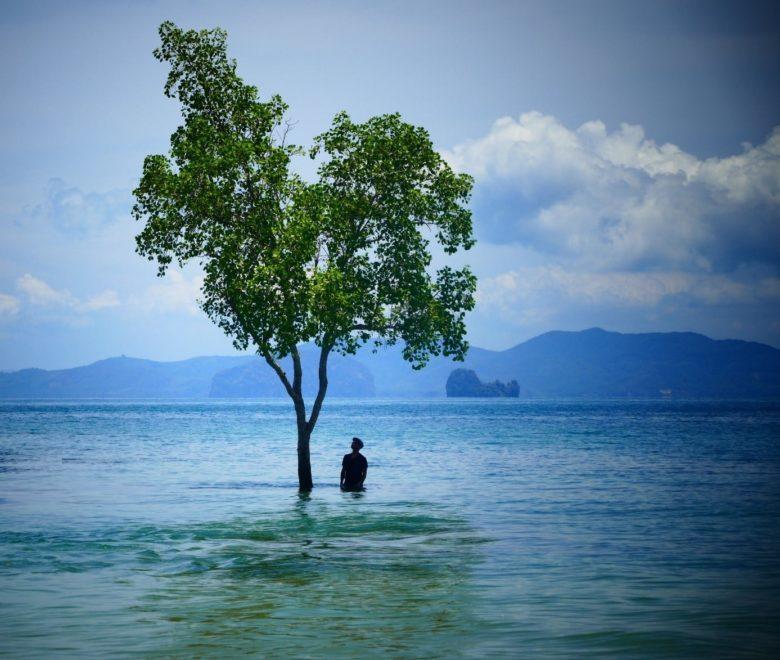 Léonard Anthony -arbre-eau